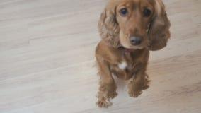 Hondtribunes op de achterste benen stock footage