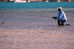 Honduran fishing Guide Kneeling. Fly-fishing guide on the Honduran island of Roatan kneeling in shallow water on the flats, having cast a fly to bonefish feeding Royalty Free Stock Photos