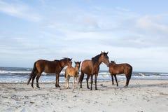 Honduran horses on the beach Royalty Free Stock Image