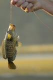 honduras jeziora yojoa zdjęcie royalty free