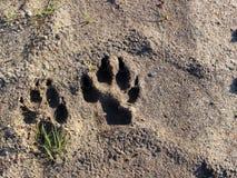Hondvoetafdruk op grond stock foto's