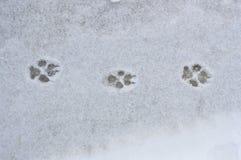 Hondvoetafdrukken in de sneeuw stock afbeelding