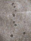 Hondvoetafdrukken op concrete vloer Stock Afbeelding