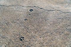 Hondvoetafdrukken op een cementvloer met een barst in de avond lig Royalty-vrije Stock Afbeeldingen