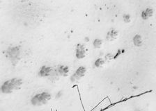 Hondvoetafdrukken op witte sneeuw royalty-vrije stock fotografie