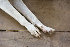 Hondvoeten Royalty-vrije Stock Fotografie