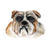 Hondwaterverf en inkt hoofdillustratie Royalty-vrije Stock Foto's