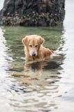 Hondzitting in het water om een vis te vangen Royalty-vrije Stock Foto's