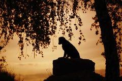 Hondzitting onder een boom in de avond Royalty-vrije Stock Afbeeldingen