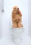 Hondzitting op toilet stock foto's