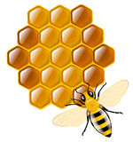 Honey. Shiny honey bee and honeycombs Stock Images