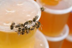 Honey#2 Royalty Free Stock Photo