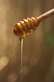 Honey. Spoon with dripping Royalty Free Stock Photography