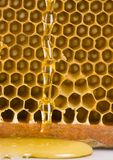 Honey. Is a sweet and viscous fluid produced by bees and other insects from the nectar of flowers.  is significantly sweeter than table sugar and has attractive Royalty Free Stock Images