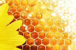 Free Honey Stock Image - 37746961