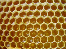 Honey. Sweet honey Royalty Free Stock Photos