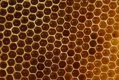 Honey. Bee's slice full of honey as background Stock Photography
