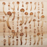 Honey agaric mushrooms on wooden background Stock Photos