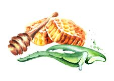Honey and Aloe. Watercolor hand drawn illustration. Royalty Free Stock Image