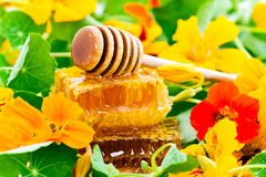 Honey And Flowers Stock Images