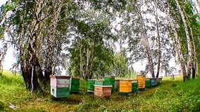 A honey apiary is in the clean place of nature Stock Photography