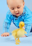 Honey baby and duck. Honey baby 6 months hunts duck stock photography