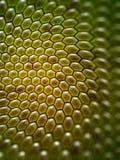 Honey background Stock Images