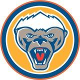 Honey Badger Mascot Head Circle rétro Photographie stock libre de droits