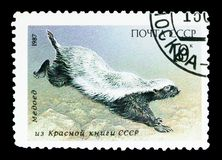 Honey Badger (Mellivora capensis), Fauna of USSR serie, circa 1987. MOSCOW, RUSSIA - MAY 15, 2018: A stamp printed in USSR (Russia) shows Honey Badger (Mellivora royalty free stock images
