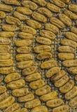 Honey Baked Bananas, banane secche, spuntino tailandese sul piatto bianco e Immagini Stock Libere da Diritti