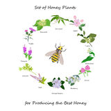 Honey banner with wild flowers wreath and bee Stock Photo