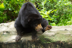 Honey Bear Stock Photos