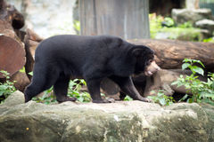 Honey Bear Fotos de archivo