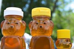 Honey Bear Family Royalty Free Stock Photography