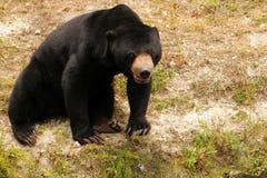 Honey bear in zoo Royalty Free Stock Image