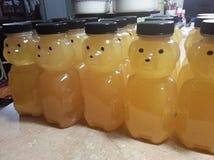 Honey Bears Stock Photography