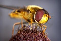 Honey bee. Bee macro series Stock Photo