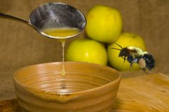 Honey and bee. Bumble bee hovering over honey Royalty Free Stock Image