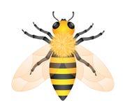Honey bee. Illustration of honey bee isolated on white background Royalty Free Stock Photos