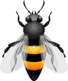 Honey Bee vector illustration
