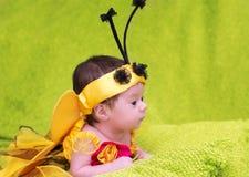 Honey Bee Baby Foto de archivo libre de regalías