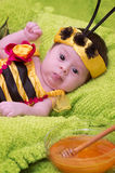 Honey Bee Baby Photos libres de droits