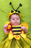 Honey Bee Baby Fotos de archivo
