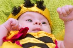 Honey Bee Baby Photo libre de droits