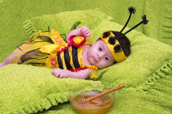 Honey Bee Baby Arkivbilder