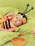 Honey Bee Baby Arkivbild