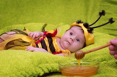 Honey Bee Baby. On green background Royalty Free Stock Image