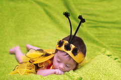 Honey Bee Baby. On green background Royalty Free Stock Images