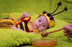 Honey Bee Baby Stock Images