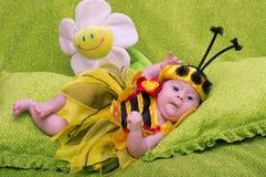 Honey Bee Baby Stock Photos